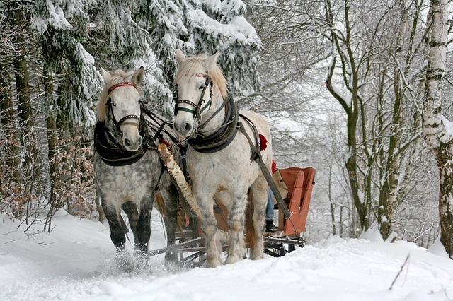 Horses pull large sleigh in snow